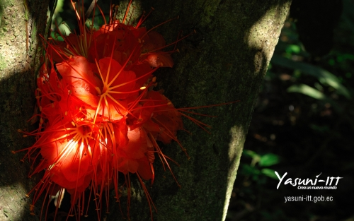 red flower from Yasuni